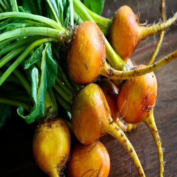 """Beta vulgaris """"Golden Detroit"""" - Sementes - 2.04€ - Jardimdaceleste.com - Plantas Tropicais & Exóticas!"""