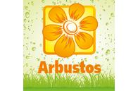 "Ilex altaclerensis ""Golden King"" - Planta - 4.9€ - Jardimdaceleste.com - Plantas do Bosque & Jardim!"
