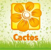 Cacti - Jardimdaceleste.com - Plantas do Bosque & Jardim!