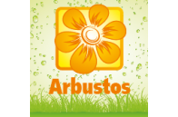 Shrubs - Jardimdaceleste.com - Plantas do Bosque & Jardim!
