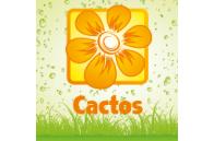 Plantas Suculentas - Jardimdaceleste.com - Plantas do Bosque & Jardim!