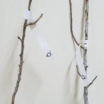Pistacia Vera (Pistachios Enchertados ) Opções: Planta Macho ou Fêmea - 40€ - Jardimdaceleste.com - Plantas do Bosque & Jardim!