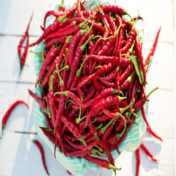 Piri-Piri - Capsicum Cayenne - Seeds - 2.75€ - Jardimdaceleste.com - Plantas do Bosque & Jardim!
