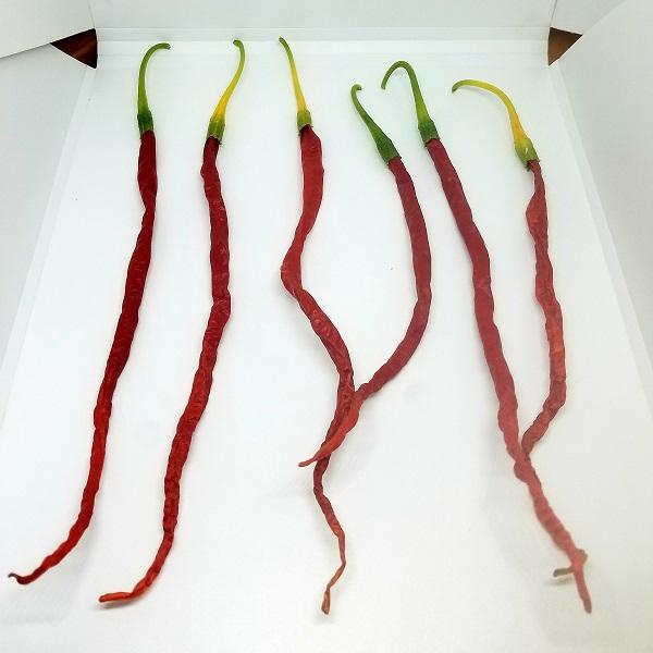"""Piri-Piri - Capsicum """"Sparghetti - Thunder Mountain Longhorn"""" - Seeds - 2.7€ - Jardimdaceleste.com - Plantas do Bosque & Jardim!"""