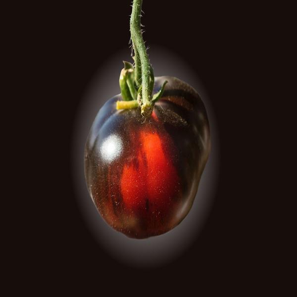 Tomate negro 'Black Brandywine' - Seeds - 2.7€ - Jardimdaceleste.com - Plantas do Bosque & Jardim!